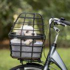 AtranVelo AVS Basket for Dogs